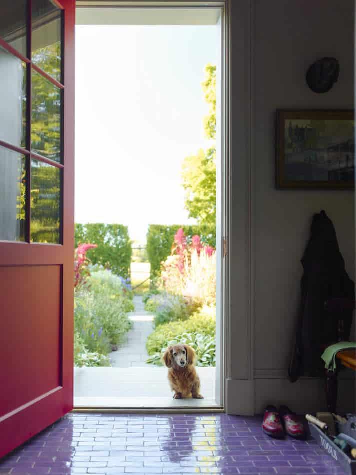 dachschund standing in a doorway