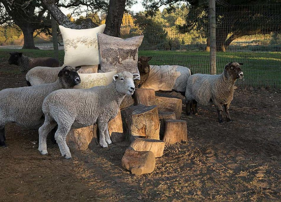 Shetland sheep provide the wool for JG Switzer's textiles.